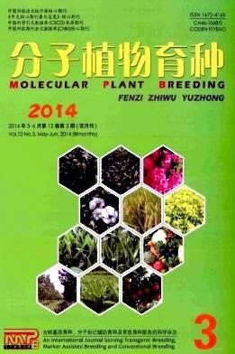 分子植物育种杂志杂志封面