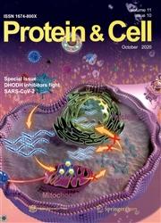 蛋白质与细胞
